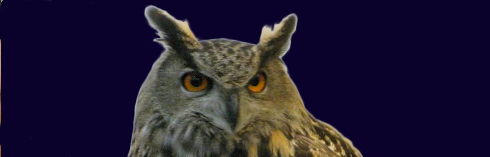 Owl Class – The Harry Potter School of Bushcraft