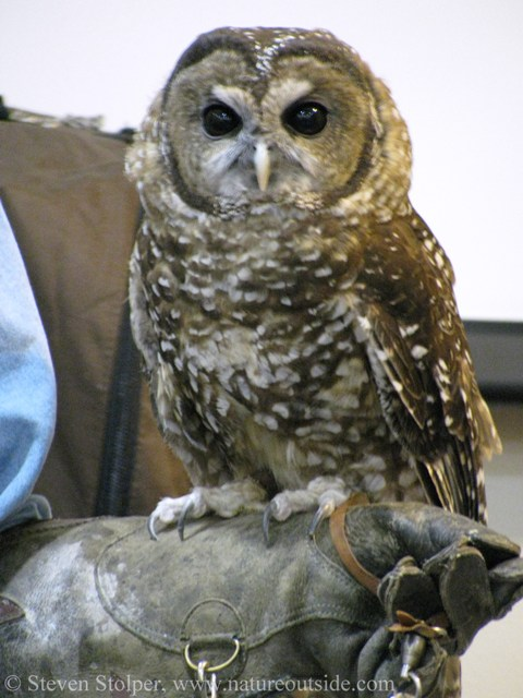the spotted owl controversy