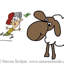 SheepNet