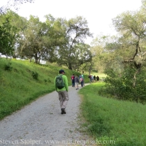 Our climb to the grasslands is shaded by oaks and bay trees.