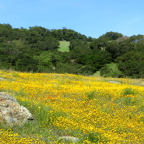 WildflowerSlider3