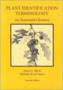 plant-identification-terminology