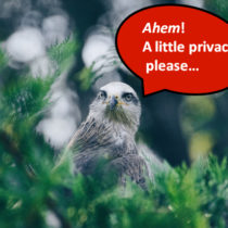 bird asking for privacy