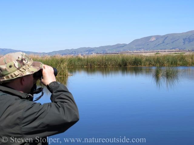 Person looking through binoculars in saltwater marsh