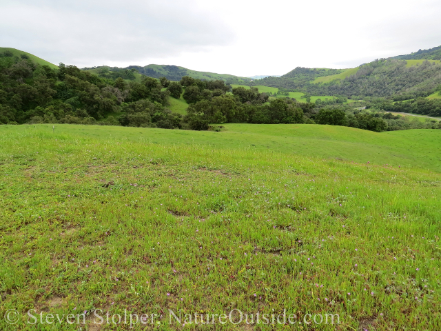 The rolling hills of Sunol Regional Wilderness