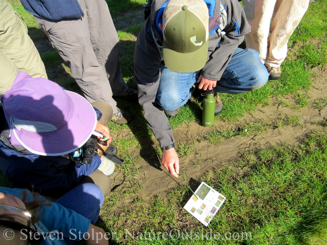 group of trackers comparing animal tracks to a field guide