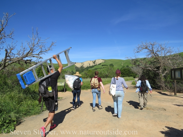 Naturalists hiking with stepladder and bag of wood shavings