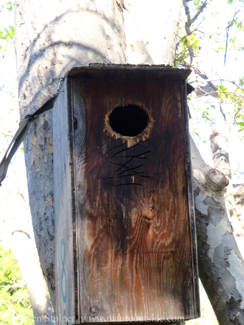 Wood Duck nest box exterior