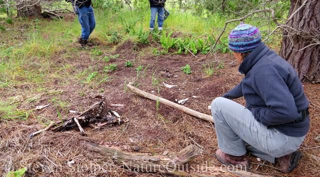 person kneeling beside mountain lion killed deer