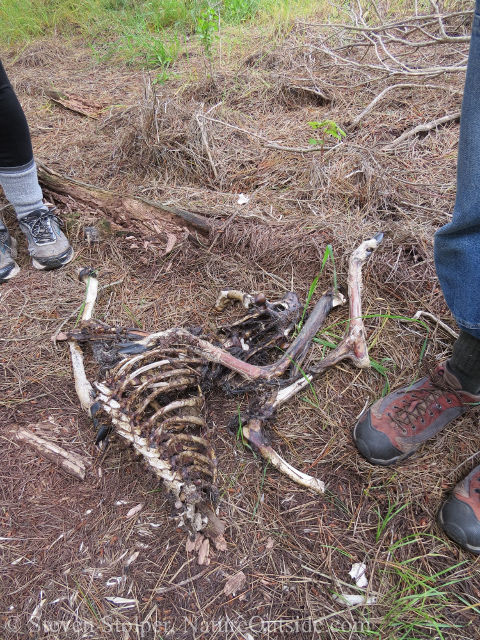 deer carcass and hiking boot