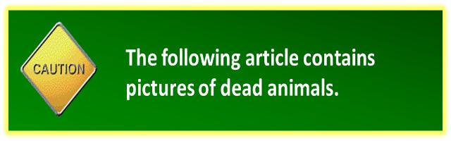 dead animal warning