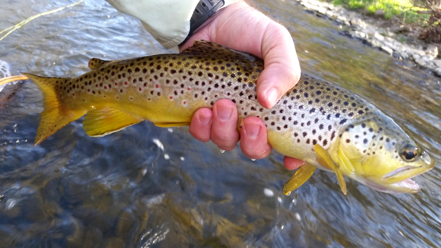 brown trout in hand Photo by Ted Seibert on Unsplash