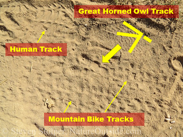 great horned owl tracks annotated