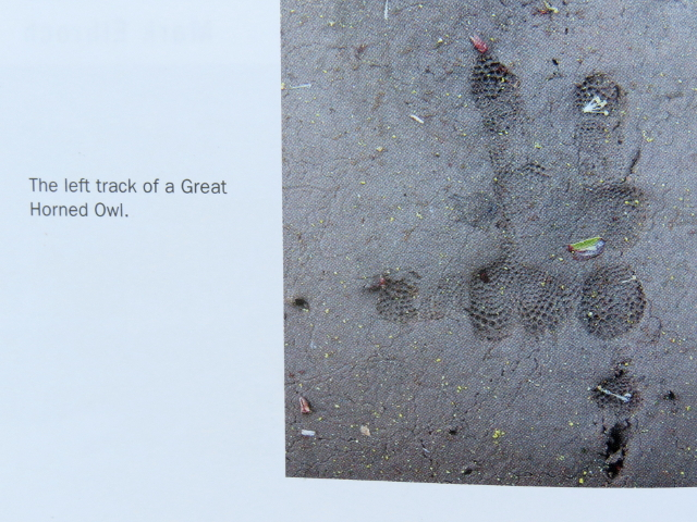 Picture of a left Great Horned Owl Track in book