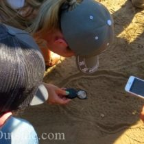 trackers examine great horned owl tracks