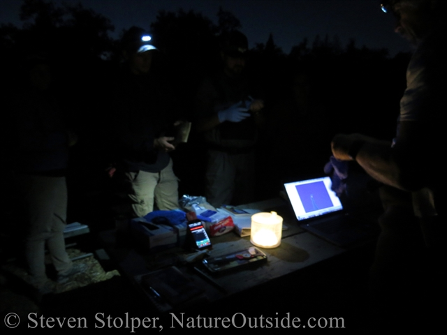bat detector and equipment at night