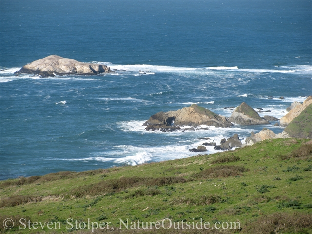 view from tomales point