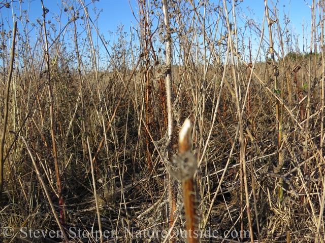plant stalks rabbit feeding sign