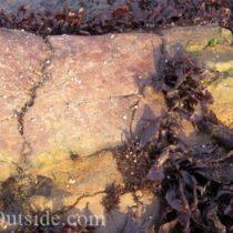 fossil whale bone