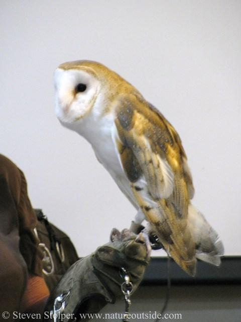 owl class the harry potter school of bushcraft natureoutside